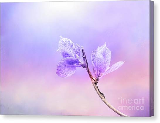 Charming Baby Leaves In Purple Canvas Print