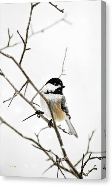 Charming Winter Chickadee Canvas Print