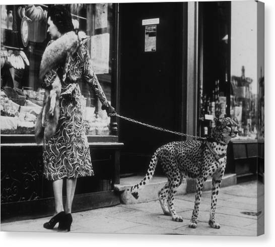 Cheetah Who Shops Canvas Print by B. C. Parade