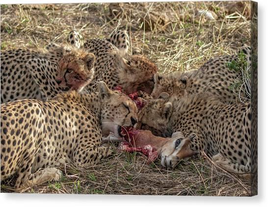 Cheetahs And Grant's Gazelle Canvas Print