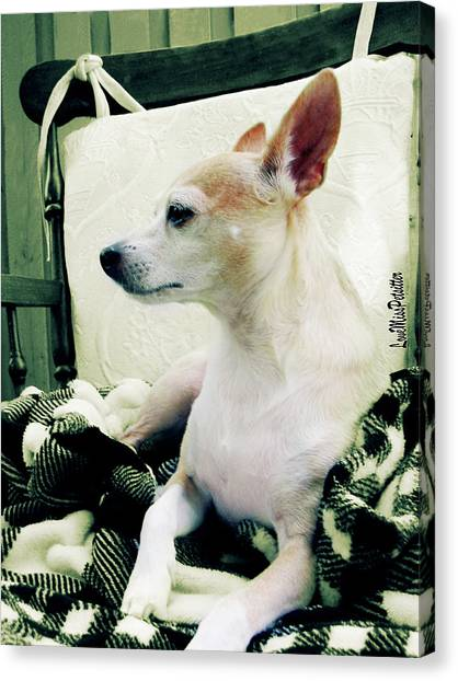 Chihuahua  Portrait  Canvas Print