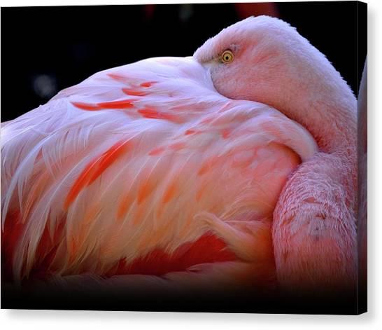 Chilean Flamingo Canvas Print by Yuko Smith Photography