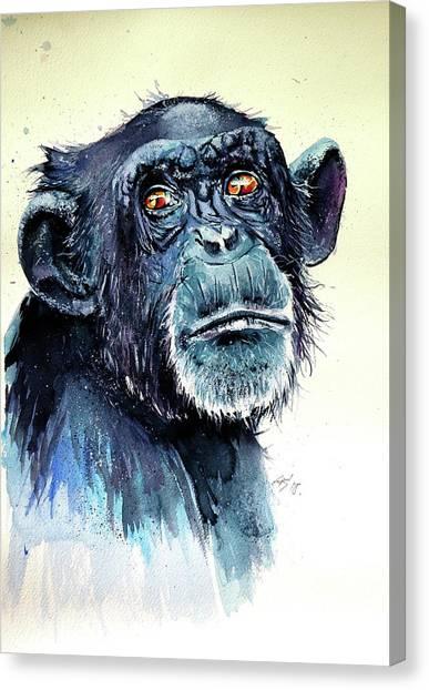 Chimpanzee Canvas Print - Chimbapzee II by Kovacs Anna Brigitta