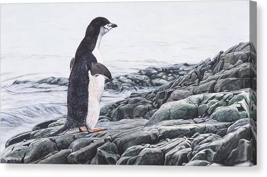 Canvas Print featuring the painting Chinstrap Penguin On A Rock By Alan M Hunt by Alan M Hunt