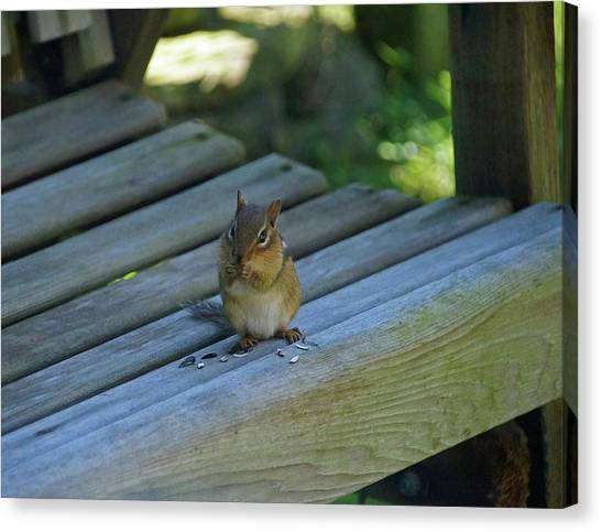 Canvas Print featuring the photograph Chipmunk Eating Seeds by Angela Murdock