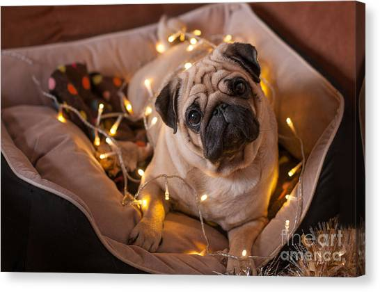Purebred Canvas Print - Christmas Dog With Garland In Bed On by Nuraam
