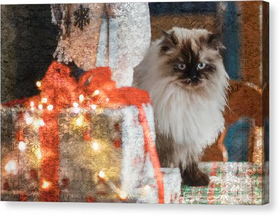 Himalayan Cats Canvas Print - Christmas Surprise by Louann Thompson