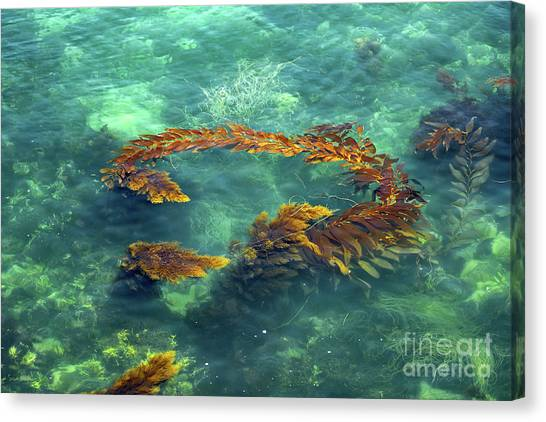 Circle Of Glistening Seaweed Canvas Print