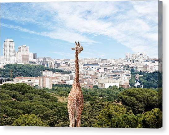 City Giraffe Canvas Print by Richard Newstead