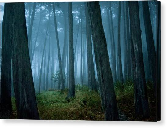 Clearing In Cypress Tree Forest Canvas Print by Siri Stafford