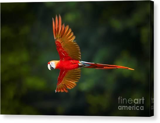Macaw Canvas Print - Close Up Ara Macao, Scarlet Macaw, Red by Martin Mecnarowski