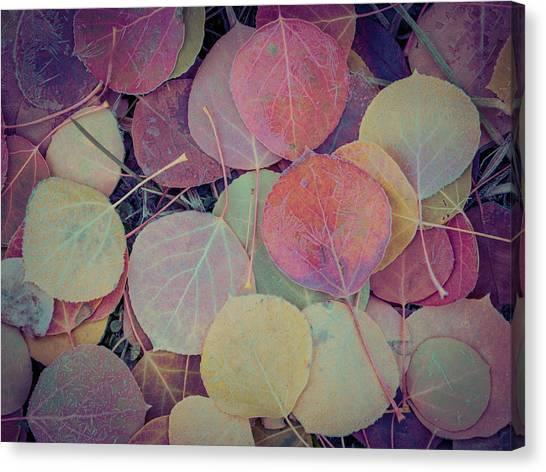 Close-up Of Colorful Fallen Aspen Canvas Print