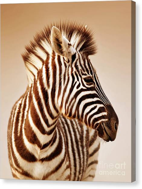 View Canvas Print - Close-up Portrait Of A  Baby Zebra by Johan Swanepoel