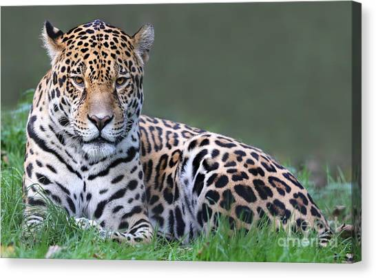 Powerful Canvas Print - Close-up View Of A Jaguar Panthera Onca by Henner Damke