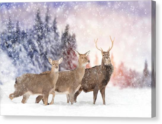 White-tailed Deer Canvas Print - Close Young Deer In Nature. Winter Time by Volodymyr Burdiak