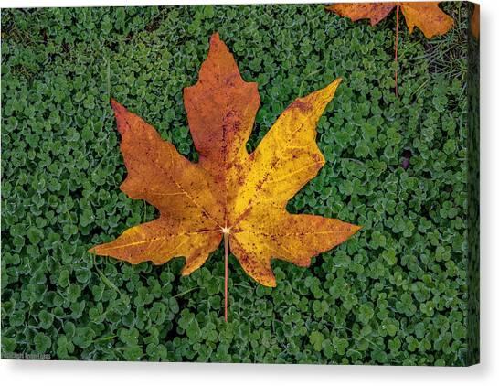 Clover Leaf Autumn Canvas Print
