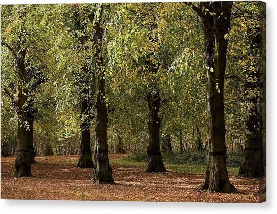 Nottinghamshire Canvas Print - Clumber Park, Sherwood, Nottingham by Chris Upton