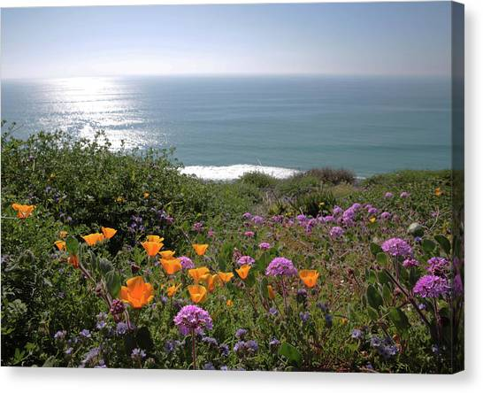 Coastal Bouquet Canvas Print by Robin Street-Morris