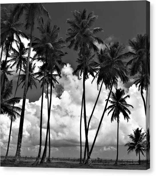 Coconut Trees At Mayaro Canvas Print