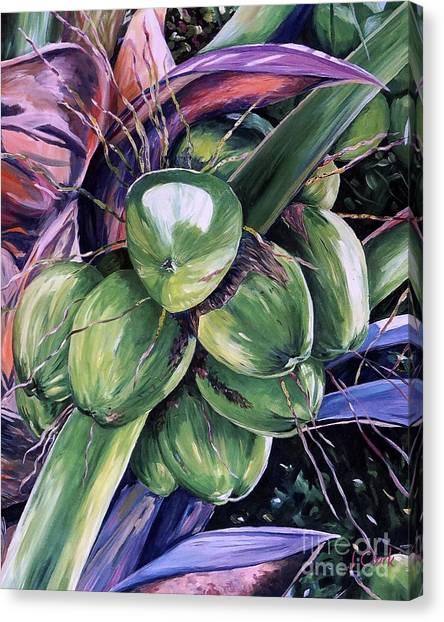 Coconut Canvas Print - Coconuts  by John Clark