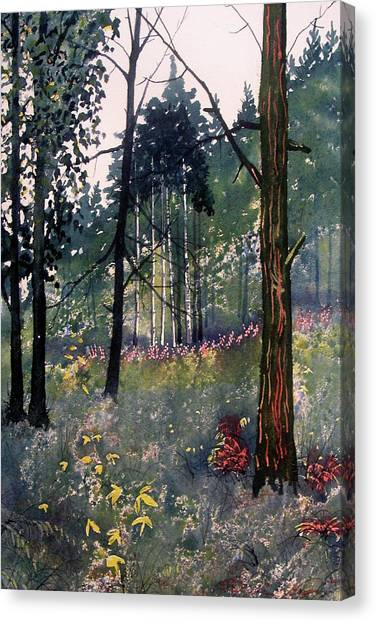 Codbeck Forest Canvas Print