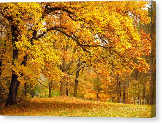 Rural Canvas Print - Collection Of Beautiful Colorful Autumn by Taiga