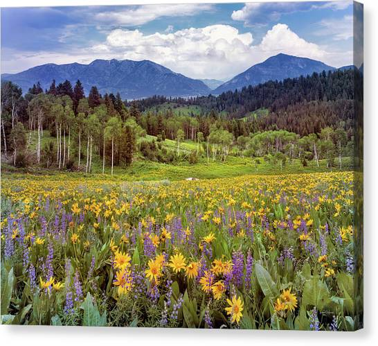 Idaho Canvas Print - Color Of Spring by Leland D Howard