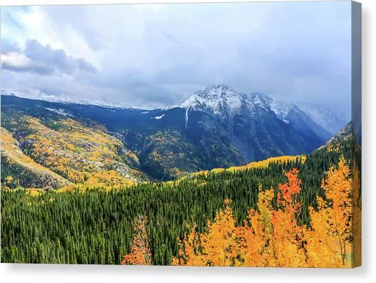 Colorado Aspens And Mountains 3 Canvas Print