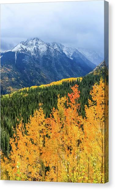 Colorado Aspens And Mountains 4 Canvas Print