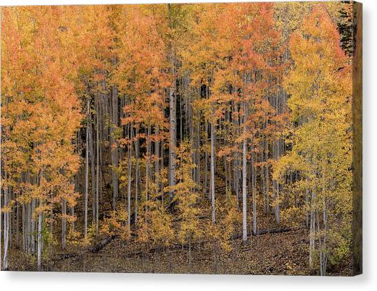 Colorado Guardians Canvas Print