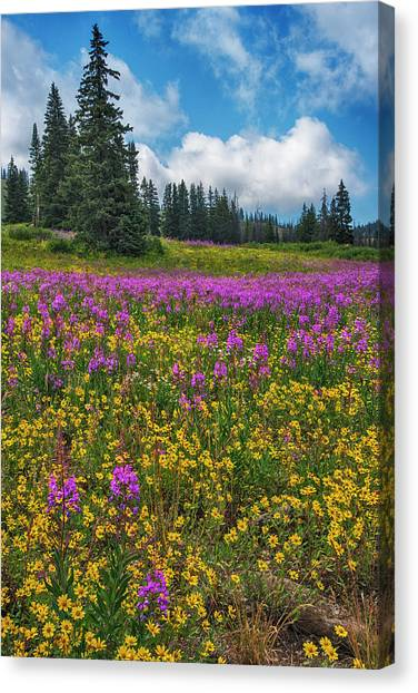 Colorado Rockies Canvas Print - Colorado Purple Lupine Near Steamboat Springs by Dave Dilli