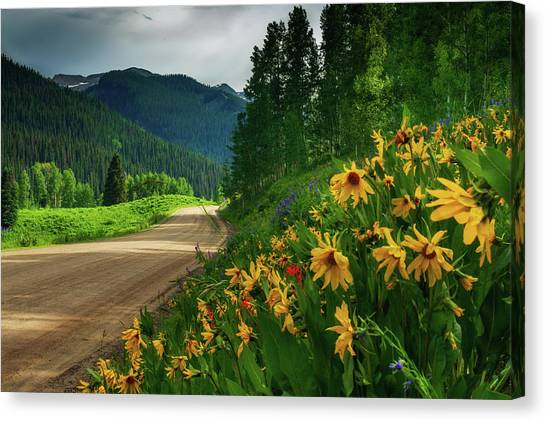 Colorado Wildflowers Canvas Print