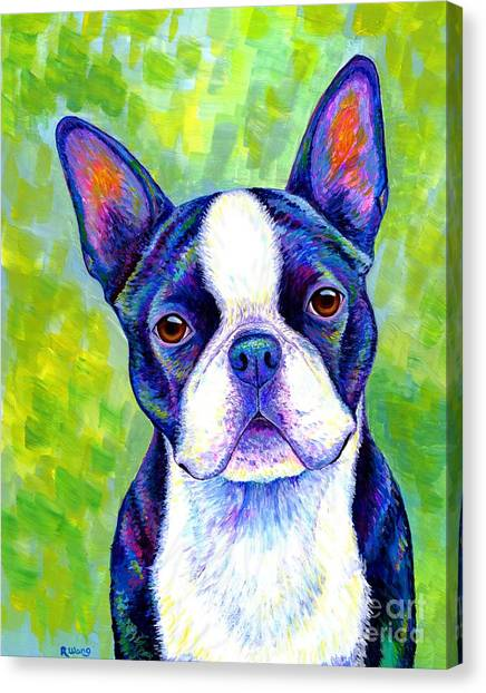 Colorful Boston Terrier Dog Canvas Print