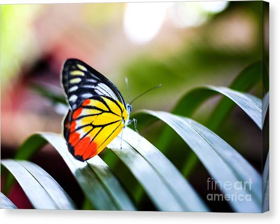 No-one Canvas Print - Colorful Butterfly Resting On The Palm by Rrrainbow