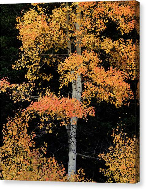 Colorful Contrast Canvas Print by Leland D Howard