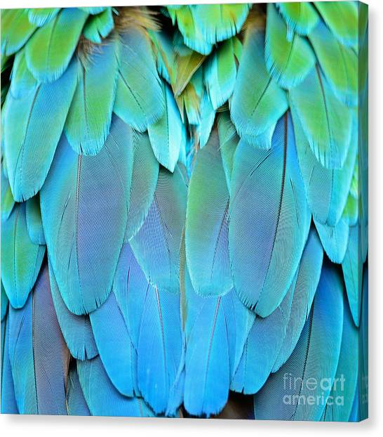 Macaw Canvas Print - Colorful Feathers, Harlequin Macaw by Panu Ruangjan
