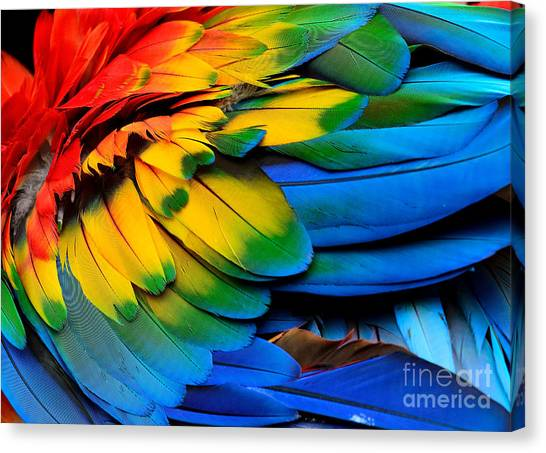 Macaw Canvas Print - Colorful Of Scarlet Macaw Birds by Super Prin