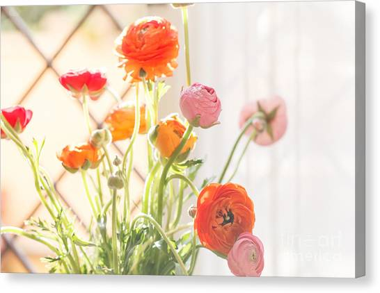 Wedding Bouquet Canvas Print - Colorful Persian Buttercup Flowers by Shebeko
