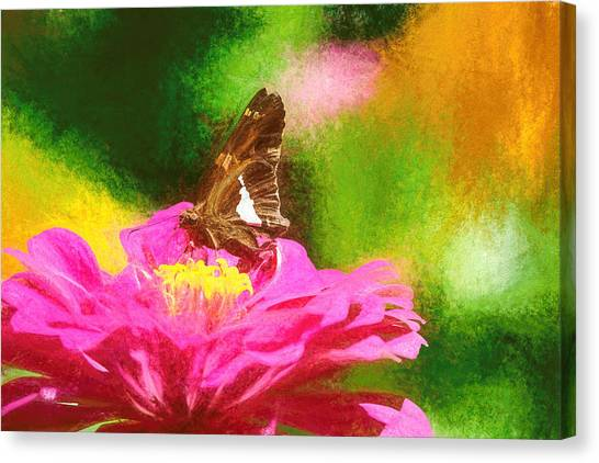 Colorful Silver Spotted Skipper Butterfly Canvas Print