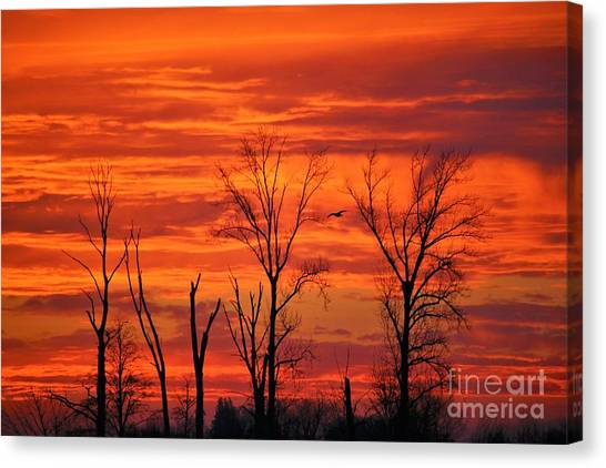 Canvas Print - Colorful Sunrise Trees by Nick Gustafson