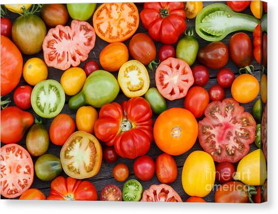 Open Canvas Print - Colorful Tomatoes by Shebeko