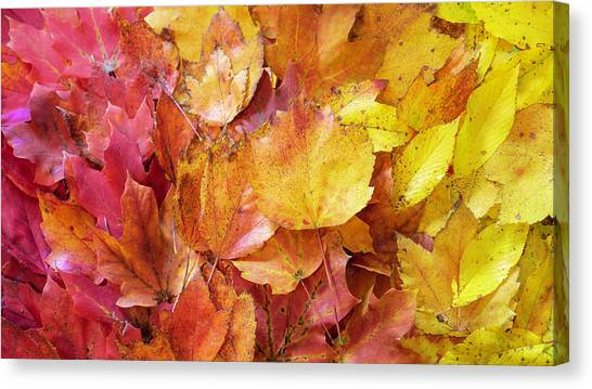Colors Of Fall - Red To Yellow Canvas Print