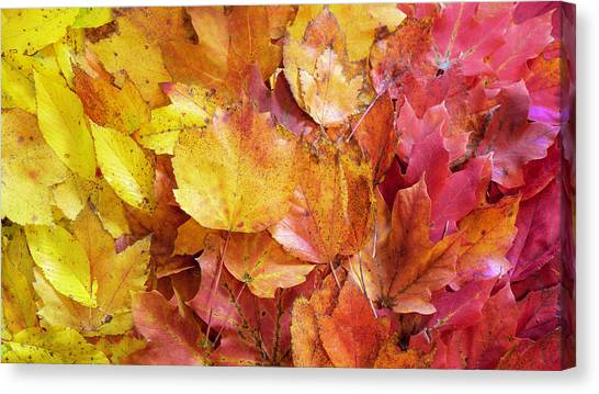 Colors Of Fall - Yellow To Red Canvas Print