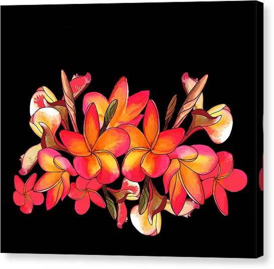 Coloured Frangipani Black Bkgd Canvas Print