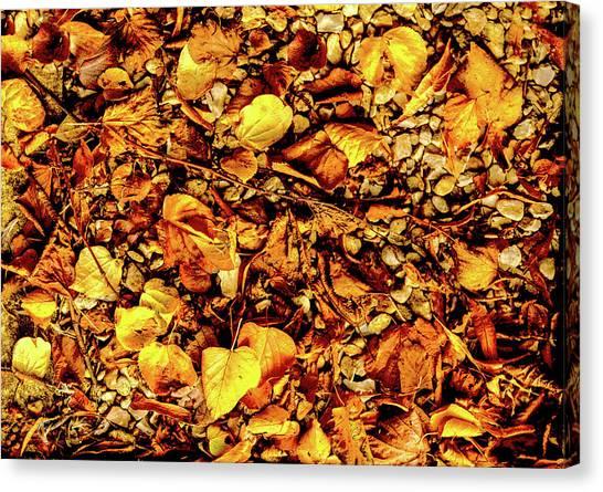 Colours. Autumn Gold Canvas Print