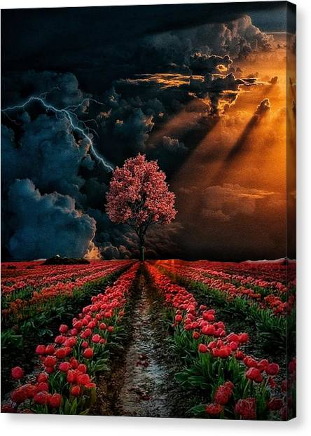 Colours Of The Sky Canvas Print