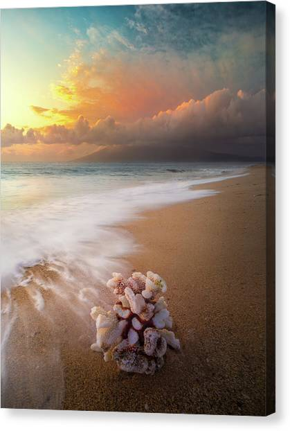 Come Back To The Sea / Maui, Hawaii  Canvas Print