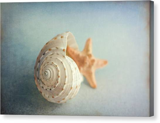 Nature Still Life Canvas Print - Conch Shell And Starfish by Tom Mc Nemar