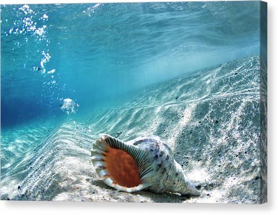 Conch Shell Bubbles Canvas Print