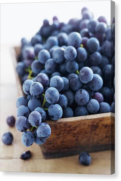 Concord Grapes Canvas Print